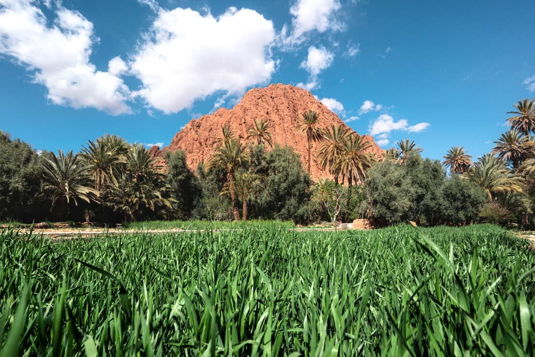 maghreb Palmeraie Tinghir Morocco maroc champs palmier palm oasis landscape wide robin favier