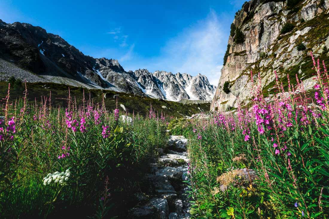 randonnée rando suisse tour du mont blanc tmb fleur sauvage chemin montagne neige mountain snow blue sky dégagé été 2020 arpette champex hike