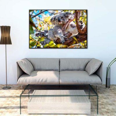 tirage impression print grand format photographie photographe paysage nature décoration art koala animaux wildlife australie