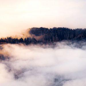 coucher de soleil forêt forest sunset clouds mer de nuage jura ain 01 nature sauvage earth sapins lumière golden hour